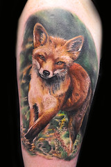 "fox by Max Pniewski • <a style=""font-size:0.8em;"" href=""https://www.flickr.com/photos/64051898@N08/15604202311/"" target=""_blank"">View on Flickr</a>"