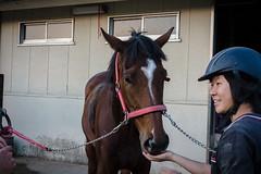 岐阜大学馬術部 (Gifu University Equestrian Club) (lorenzotulipano) Tags: horses horse japan riding 日本 岐阜 gifu equestrian horseriding 馬 馬場 馬術 岐阜大学 gifuuniversity sonyrx100