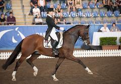 141025_2014_AUS_D_Champs_IntFS_5170.jpg (FranzVenhaus) Tags: horses performance sydney australia competition event nsw athletes aus equestrian riders dressage siec