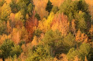 Autumn palette, Etna.