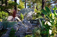 Autumn in the exotic garden (dan.kristiansen) Tags: autumn trees pine garden island exotic furu hage bananatree hst 2014 y exoticgarden cordylineaustralis eksotisk bananpalme musasikkimensis eksotiskhage middelhavshage