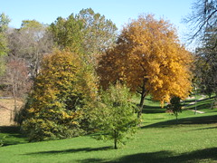 Colours Trees (laedri52) Tags: trees tree fall nebraska omaha aa sonbahar aalar renkli gz
