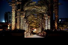LIGHT PASSAGE (anoopmoidutty) Tags: light museum photography palm snaps passage dates islamic doha qatar