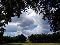 Peeking Through (johnandmary.F) Tags: sky clouds ocalafl sholompark