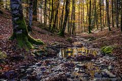 Paz absoluta (SantiMB.Photos) Tags: autumn espaa reflection forest bosque reflejo otoo esp navarra irati ochagavia 500px 2tumblr sal18250 2blogger fotohiking