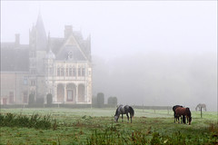 Brume (rogermarcel) Tags: horse mist castle chateau chevaux rogermarcel