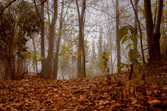 Made in Autumn (buenri_fly) Tags: autumn mist fall nature beauty fog forest landscape herbst jungle otoo mystic magicplace
