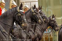 DSC_9897.jpg (Sav's Photo Gallery) Tags: street city uk horses people london outdoor candid military capital marchingband cityoflondon horseguards lordmayorsparade d7000 savash