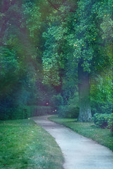 Enchanted Path (Caroline Van Doering) Tags: france forest woods nikon magic fairy magical faerie fontainebleau carolinecouture