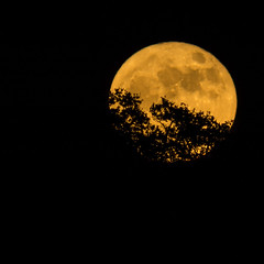 Supermoon_11_14_16 020 (VinceFL) Tags: brunswickga fullmoon luna manfrottotripod moon nikond7100 nikonmll3 outdoors saintsimonsislandga sky supermoon tamron70300mmf456dild12autofocusmacro vincefl