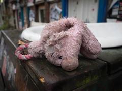 Pink pig (20161015_EbenMarks_1-6) (Eben Marks) Tags: berlin germany de abandoned stuffedtoy pig pink outside rain wet