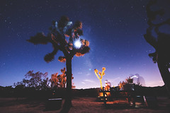 under the moon (For The Nguyen!) Tags: joshua tree national park stars stargazing night photography long longexposures exposure sky darkness trees light polution sony alpha a77 dslr quality purple skies desert