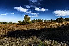Brunssumerheide The Netherlands (Dirk Kelleter Photography) Tags: landscape landschaft limburgslandschap brunssumerheide natuurlijk nederland canon eos eos6d ef canonef24105mmf4lisusm