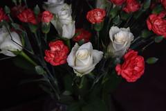 DSC_3209 (PeaTJay) Tags: nikond750 reading lowerearley berkshire macro micro closeups gardens indoors nature flora fauna plants flowers rose roses rosebuds carnations