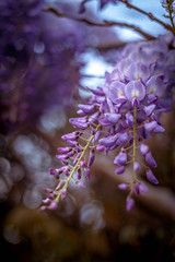 Todo Tiene un Final (All Ends) (Dibus y Deabus) Tags: gijon asturias espaa spain flores flowers naturaleza nature canon 6d primavera spring