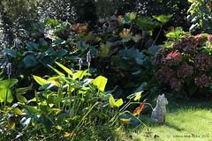 HERFST BIJ DE VIJVER || AUTUMN AT THE PONT (Anne-Miek Bibbe) Tags: canoneos700d canoneosrebelt5idslr annemiekbibbe bibbe nederland 2016 tuin garden jardin giardino jardim natuur nature oktober || october ottobre octubre outubro herfst autumn outono herbst automne otoo