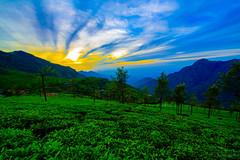 Sunrise In The Nilgiris (Coonoor)-7169 (rajeevchopra.india) Tags: sunrise clouds cloud nilgiri coonoor india tea teaestate bluemountains mountains incredibleindia