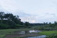 H504_3572 (bandashing) Tags: teagardens water green lush field path tree bush tea sylhet manchester england bangladesh bandashing aoa akhtarowaisahmed socialdocumentary
