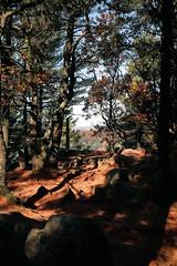 7Q7A6217 (armincreates) Tags: nature fall colors trees lake mountains hike dog puppy beauty trail panorama sunset cows farm wisconsin illinois usa walk