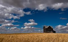 Prairie Home (Flint Roads) Tags: nd northdakota usa abandoned blue bluesky clouds decay deteriorated forsaken home homestead house prairie rural wheat
