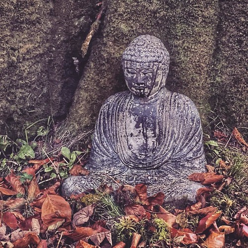#Buddha #autumn #karunainstitute #devon