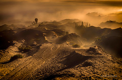 Mt Bromo (sandilesmana28) Tags: sunrise bromo tree nature gold