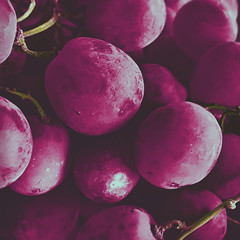 308   366   V (Randomographer) Tags: project366 red globe seeded grapes delicious nutritious fruit greenhouse vitis vinifera purple iphone organic snack juicy round food edible 308 366 v