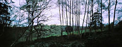 Scotney Castle Trees (Matthew Huntbach) Tags: kent panoramic widepic trees scotneycastle