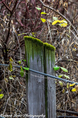 Green With Envy (vernonbone) Tags: 2016 500mm d3200 eastpoint eastpointpark lens milkweed november ontario september closeup colors landscape nikon outside path sigma street stuff walkingtrail