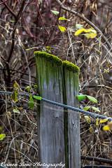 Green With Envy (vernonbone) Tags: 2016 500mm d3200 eastpoint eastpointpark lens milkweed november ontario september closeup colors landscape nikon outside path sigma street stuff walkingtrail