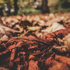Autumn vibes. (PWDunn) Tags: autumn fall nature outdoors leaf leaves crisp trees bokeh closeup vsco lightroom