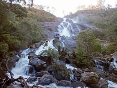 Wide and tall (LeelooDallas) Tags: australia tasmania bay fires pyengana columba waterfall tree forest dana iwachow fuji finepix hs20 exr