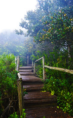 fray jorge 10 (Marce Lefort) Tags: bosque frayjorge chile reserva desierto coquimbo arboles verde neblina vida