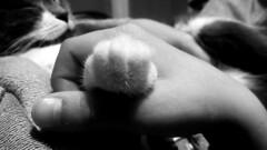 50/52 Hand and paw (Isa****) Tags: main patte chat hand smileonsunday animalpaws