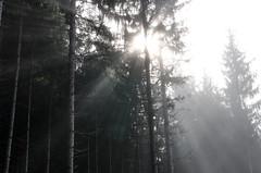 20161030-WOL_7728.jpg (viennalinux) Tags: spaziergang nebel herbst nature tauern fog natur ossiach ossiacher