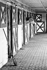 Broom (pluffmud2010) Tags: horse stable thoroughbred aikensc blackandwhite horseracing training riding tool simplicity equestrian sport sportofkings