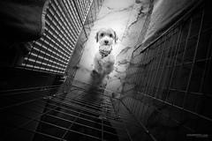 imprisoned (Ivan Pekić - www.ivanpekic.com) Tags: imprisoned jail locked prison dog animal sad lonely alone hope love little eye sorrow sadness