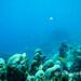 Snorkelling Cartagena