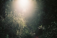 Light chaser (Katie Tarpey) Tags: light sun wilderness bush plants walkingtrack gippsland bluepool afternoon winter victoria australia lightchaser film nikonfm10 nikkor50mm14 kodak kodakportra400 dreamy ethereal
