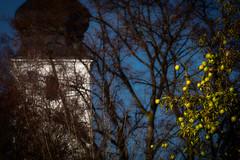 Adventspfel (Renate Bomm) Tags: 2016 366 apfel canoneos6d ef200mmf28l renatebomm golden kln nordrheinwestfalen deutschland de baum tree city cologne ngc apple obstbaum fruits goldengallery flickrunitedaward natur nature