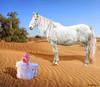 Adornment... (rubyblossom.) Tags: mii challenge 1 white horse arab desert adorn beautiful rubyblossom rubystreasures sand tree 2016