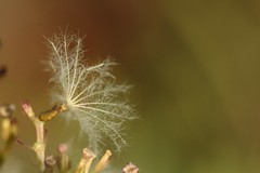 Dlicat (daubiwan) Tags: ifttt 500px macro photo nature green verte plante plant grass herbe 100mm canon 70d
