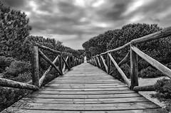 "Pasarelas Infinitas -  Infinite Runway . (frankolayag) Tags: blancoynegro frankolaya pasarelas huelva españa andalucia caminos doñana madera nikond5300 ""nikonflickraward"" paisajes"