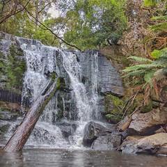 Lilydale Falls (Fritzvds) Tags: lillydalefalls tasmania waterfall shortwalk