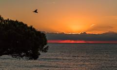 Amanecer Nublado (carlosmotje) Tags: playa 750d canon pajaro arboles agua amanecer colores sol rojo amarillo volar nubes blanes 6am