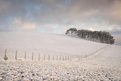 A Winter Landscape (.Brian Kerr Photography.) Tags: winter snow scotland scotspines scottishlandscapes sonyuk a7rii cold coldmorning frozen frosty trees briankerrphotography