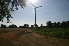 20130720_IMG_0130 (anriro96) Tags: elements heemsen nienburg feld ernte gras getreide blau blue sky rohrsen weser sun summer