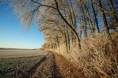 cold (++sepp++) Tags: bayern deutschland graben landscape landschaft landschaftsfotografie lechfeld rauhreif winter hoarfrost germany bavaria bume trees