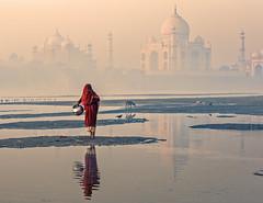 MYI_6068b (yaman ibrahim) Tags: india agra nikon d3 tajmahal yamuna morning water saree mis misty