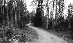 Frozen lane (sakarip) Tags: sakarip lane way forest winter kerava bw blackandwhite monochrome finland trees frozen path alley
